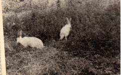 lapins rue J jaurès